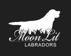 Moon Lit Labradors